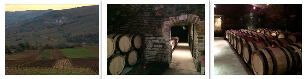 Terroirs Vins, Vignobles et Vignerons